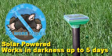 Will repell moles for up to 7 days in bad weather.